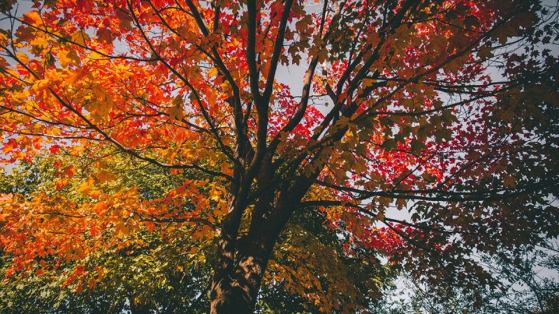 Photo of autumn color in trees