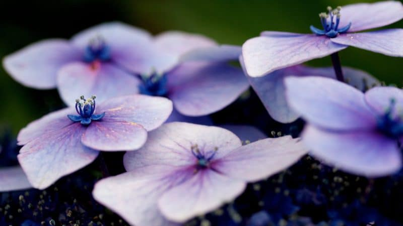 Macro photo of purple flowers